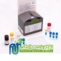 کیت B HCG-2